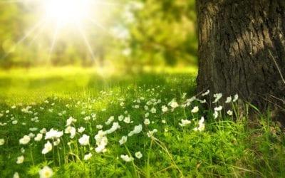 Umwelt & Natur